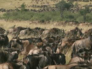 Masai Mara Express