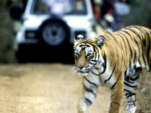 Tiger Safari (Ranthambhore) & Tour to Jaipur Photos