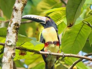 Rainforest Trekking: Indio Maiz Reserve - Nicaragua Photos