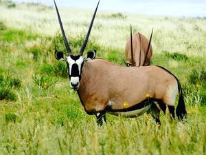 Day Trip to Mkomazi National Park Photos