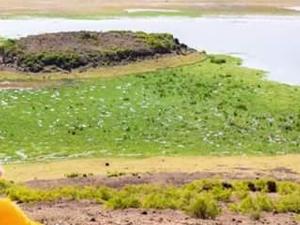 Amboseli, Lake Nakuru, Mara Safaris Fotos