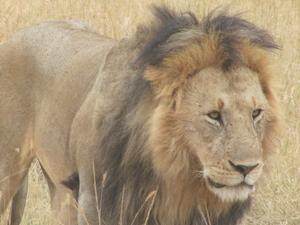 10Days/9Nights safari Kenya Photos