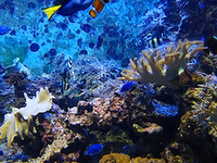 Singapore 4 Day Budget Package with S.E.A. Aquarium and More...