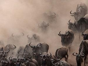 7 Days Highlights of Kenya Safari Photos