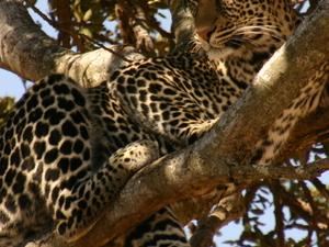 Spot Big Game In Open Plains of Kenya Photos