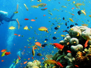Bodrum Excursions Scuba Diving Photos