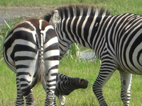 9 Days Luxury Safari North Tanzania