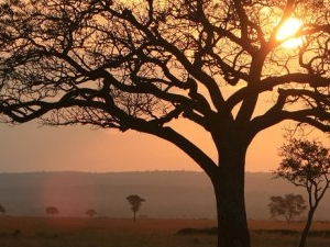 6 Days / 5 Nights in Selous Game Reserve & Mikumi National Park Photos