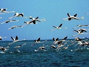 Cultural Tour : Puri - Konark - Bhubaneswar - Chilika Lake