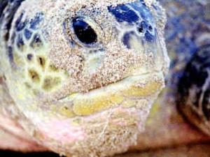 Two Days Turtle Beach & Desert Trip