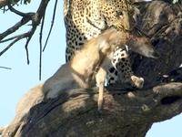 Best Safari Offers Kenya - Valid Till 31st OCT 2017 !!