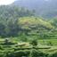 Wayan Subrata