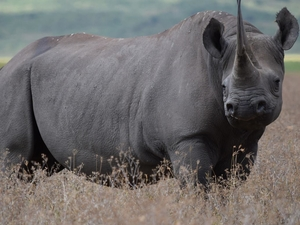 Tanzania Safari and Culture Photos