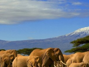 Getaway to Amboseli Serena Lodge Photos