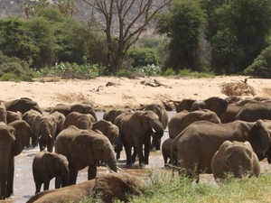 3 Days 2 Nights Samburu Getaway Photos