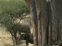 Tarangire Manyara Safari