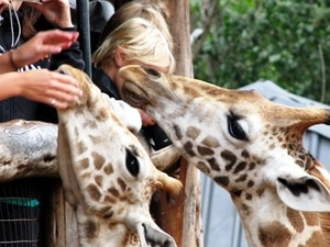 Nairobi full day excursions Photos