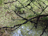 Fanno Creek
