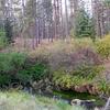 Metolius Springs