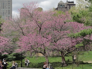 Central Park Movie Sites Walking Tour Photos