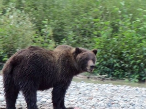 Skagway Shore Excursion: Chilkoot Trail Hike and Float Tour Photos