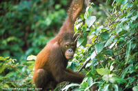 2-Day Small-Group Tour: Sandakan City and Wildlife Experience from Sabah Photos