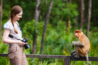 3-Day Tour from Sabah: Sandakan Sightseeing and Wildlife Experience in Sepilok and Selingan Photos