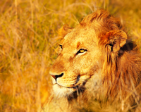 4-Day Kruger National Park Safari Tour from Johannesburg: Game Drives and Wilderness Walks Photos