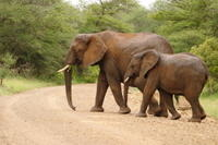 4-Day Kruger National Park Safari Adventure