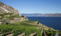 4-Day Tour to Kelowna from Vancouver Including Okanagan Winery Tour Photos