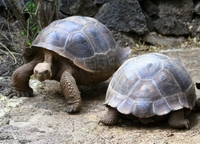 5-Night Galapagos Tour from Quito including 3-Night Yacht Cruise on the 'Queen Beatritz' Photos