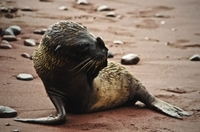 9-Night Galapagos Tour from Quito: San Cristobal, Isabela, Florena and Santa Cruz Island
