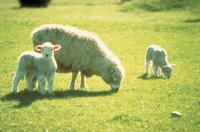 Akaroa Shore Excursion: Banks Peninsula, Christchurch City Tour and Sheep Farm Tour Photos
