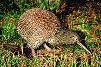 Akaroa Shore Excursion: Banks Peninsula, Christchurch City Tour and Willowbank Wildlife Reserve Photos