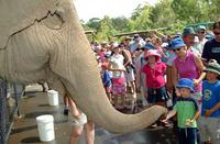 Australia Zoo by Croc Express Coach Photos
