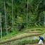 Bali Kintamani Volcano, Ubud and Barong Dance Full-Day Tour