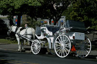 Beacon Hill Park Carriage Tour Photos