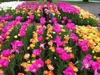 Behind-the-Scenes Keukenhof Gardens Day Trip from Amsterdam Including Picnic Lunch and Haarlem Walking Tour Photos
