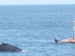 Boston Whale Watching Cruise Photos