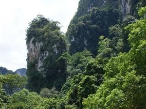 Khao Sok Full Day Jungle Safari from Phuket Photos