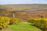 Champagne Tour from Paris: Moet and Chandon, Hautvillers and the House of Mumm Photos