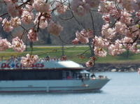 Cherry Blossom and Monuments Cruise in Washington DC Photos