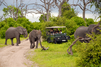 Chobe National Park Day Trip: Game Drive and River Cruise Photos