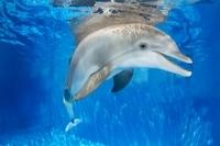 Clearwater Marine Aquarium Day Trip from Orlando Photos