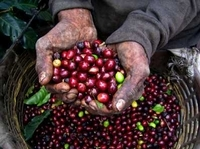 Colombian Coffee Tour from Bogotá Photos