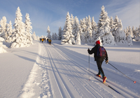 Cross-Country Ski Rental in Lake Tahoe Photos