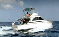 Deep Sea Fishing from St Lucia Photos