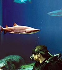 Dive with the Sharks at The Florida Aquarium in Tampa Bay Photos
