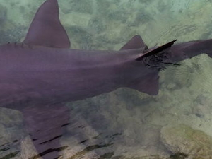 Ocho Rios Dolphin Swim Photos