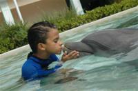 Dolphin Experience at the Miami Seaquarium Photos